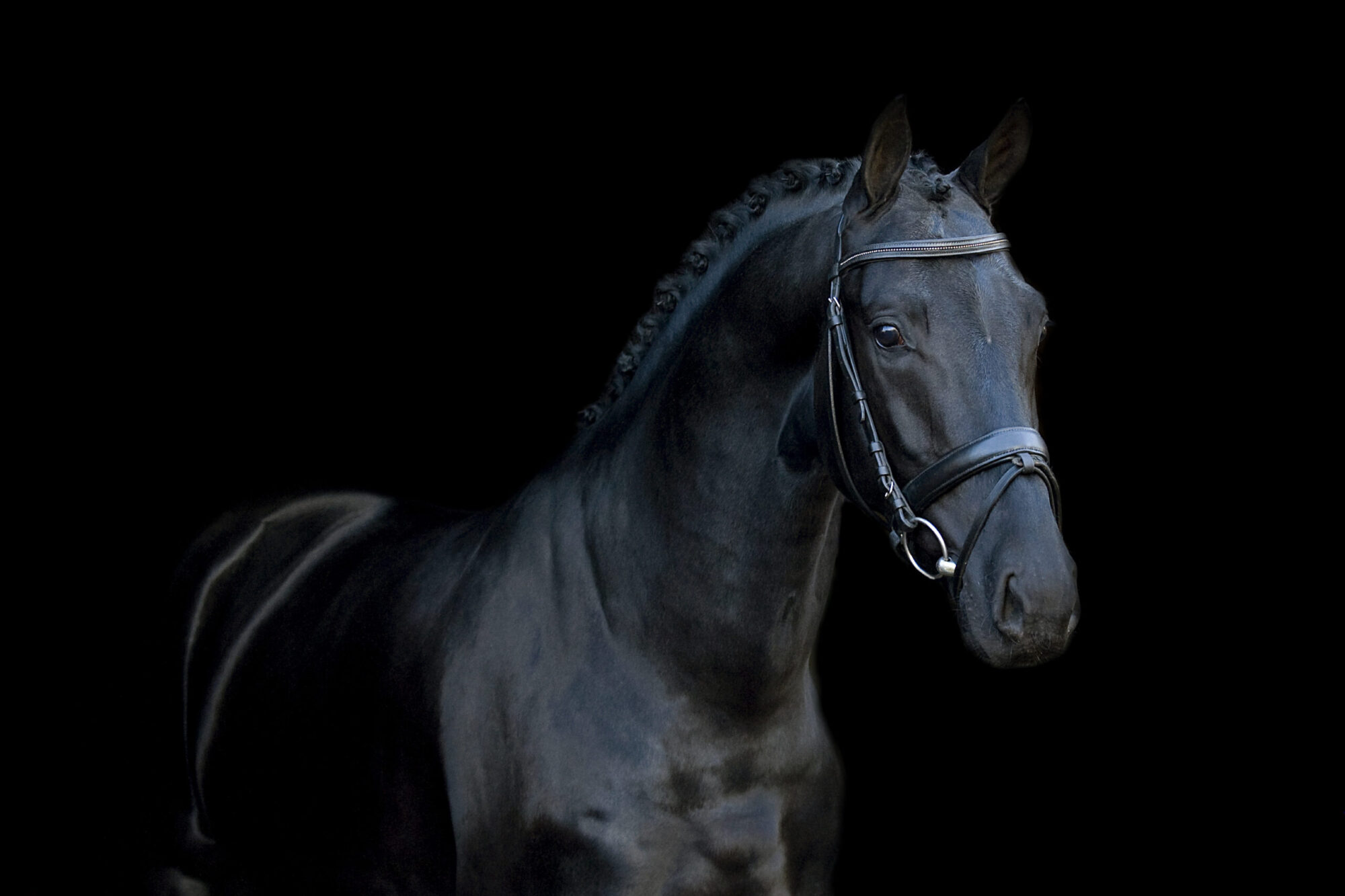 Equestrian Photo